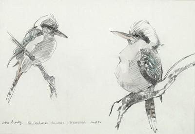 Picture of Kookaburras by John Busby
