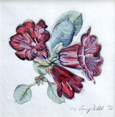 Picture of Rhododendron Forestii - Red by Marjorie I Campbell