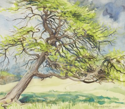 Picture of Larch Tree 4, Letham Farm by Margaret Mitchell