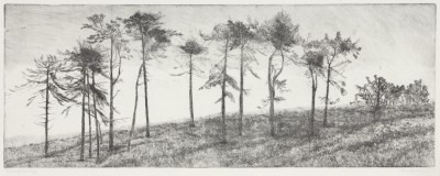 Picture of Windswept Trees by Kirstie Behrens