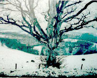Picture of Winter Tree by Tom Davidson
