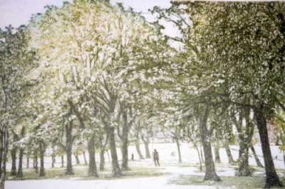 Picture of The Meadows by Cat Outram