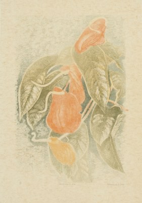 Picture of Anthurium II A by Gladys McAvoy