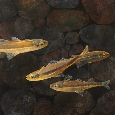 Picture of Fish: Christ God's Son Saviour by Graham Booth